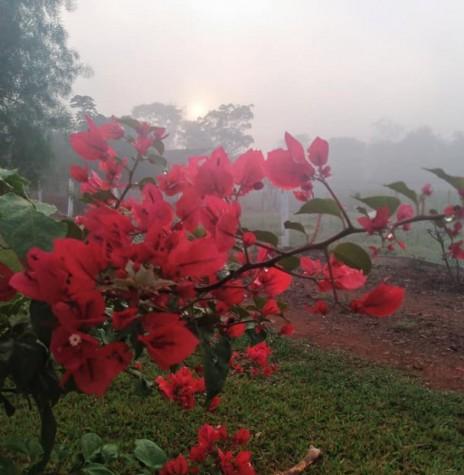 Outro instantâneo da neblina em Marechal Cândido Rondon, no dia 126 de junho de 2021, na propriedade do casal Roselene e Semildo Laske. Imagem: Acervo e crédito de Roselene Zimmermann Laske - FOTO 8 -