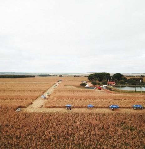 Dia de Campo de Milho Safrinha Copagril 2018 na fazenda da família Petrykoski, em Itaquiraí (MS)> Imagem: Acervo Comunicação Copagril -  FOTO 16 -