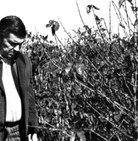 O então governador Jayme Canet Júnior visitando os cafezais do Norte do Paraná atingidos pela geada negra de 1975. Ele próprio um cultivador de café na região.  Imagem: Acervo http://www.jws.com.br  - FOTO 3 -