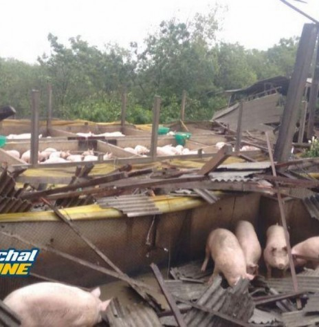 Propriedade de criação de suínos no distrito de Iguiporã, destruída pelo temporal.  Imagem: Acervo Marechal OnLine - FOTO 8 -