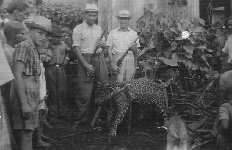 Alfredo Nied, ao centro, de camisa de mangas arregaçadas,  posando com a onça caçada.  Imagem: Acervo Familia Seyboth