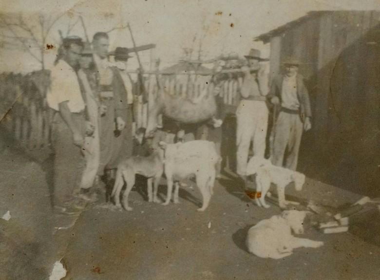 Mais um grupo de caçadores formado por pioneiros rondonenses exibindo o produto da caça: um veado carregado do local do abate até vila, num varal.
