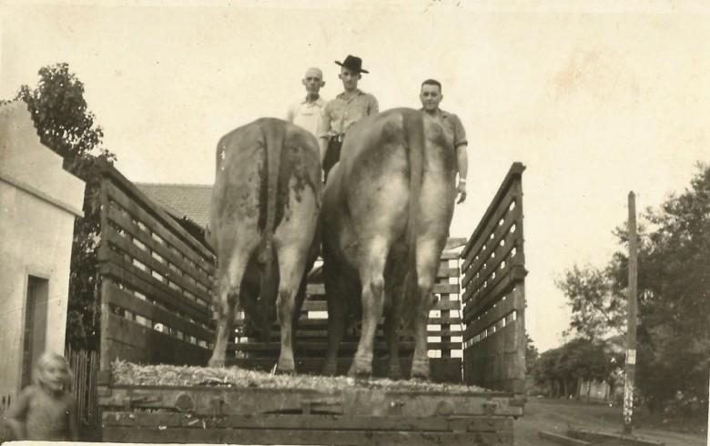 Animais para abate no matadouro do pioneiro Ivo Kock, ela á direita da foto.