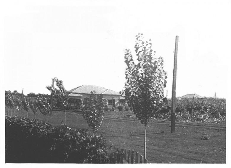 Farmácia e residência da família Seyboth, em  1955.