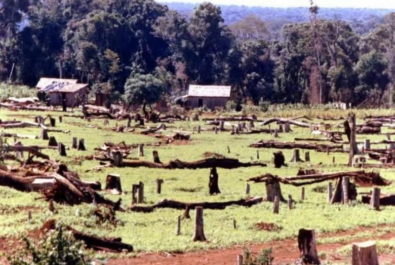 Plantação de hortelão no interior do município de Marechal Cândido Rondon (PR). Imagem: Acervo Jorge Roberto Freitag (Raúl Peña - Paraguai).