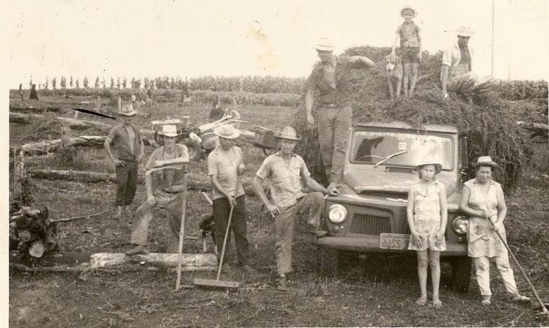 Colheita da hortelã em Mercedes, no início da década de 70.