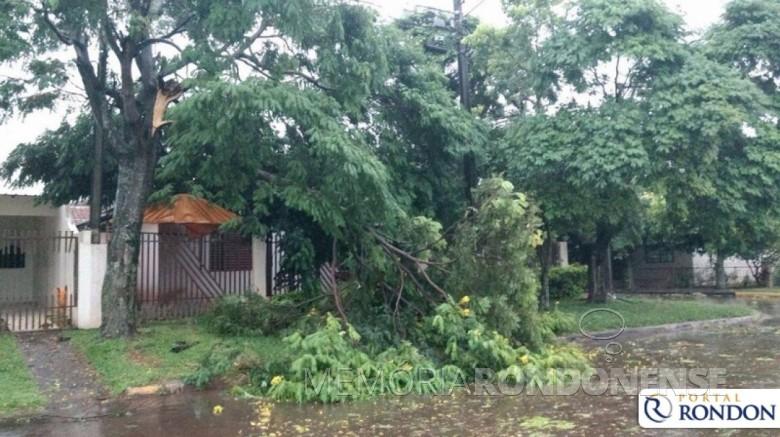 Estragos causados pelo temporal de 09 de fevereiro de 2017.  Imagem: Acervo Portal Rondon - FOTO 4 -