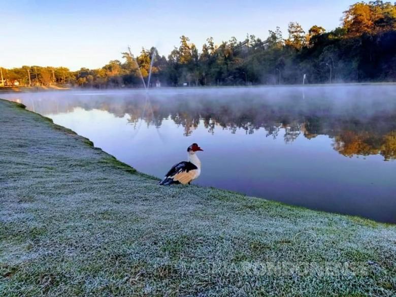 Vista da geada no Parque de Lazer Rodolfo Rieger (Lago Municipal), em começo de julho de 2019, em Marechal Cândido Rondon. Imagem: Acervo PM - MCR - FOTO 10 -