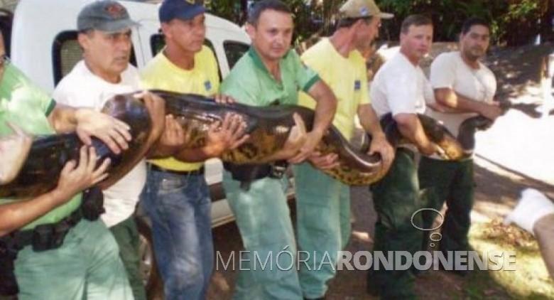 Pescadores e monitores ambientais com a sucuri pescada no Rio Guaçu.  Imagem: Acervo zonaderisco.blogspot.com - FOTO 5 -