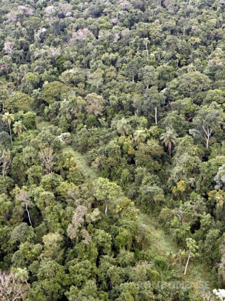 A vegetação se recompondo no antigo trecho da Estrada do Colono, depiois de fechada. Imagem: Acervo Instituto Socioambeintal - FOTO 8 --