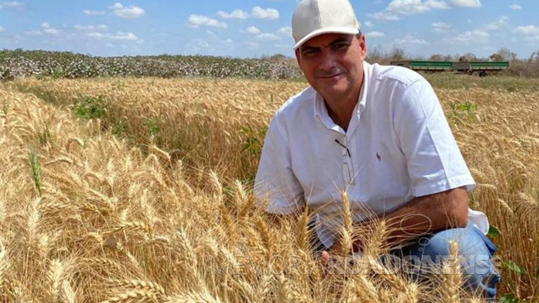 Agricultor Alexandre Sales em sua lavoura de trigo, a primeira cultivada no Nordeste Brasileiro, no estado do Ceará. Imagem: Acervo Alattea Agronegócios - FOTO 16 -