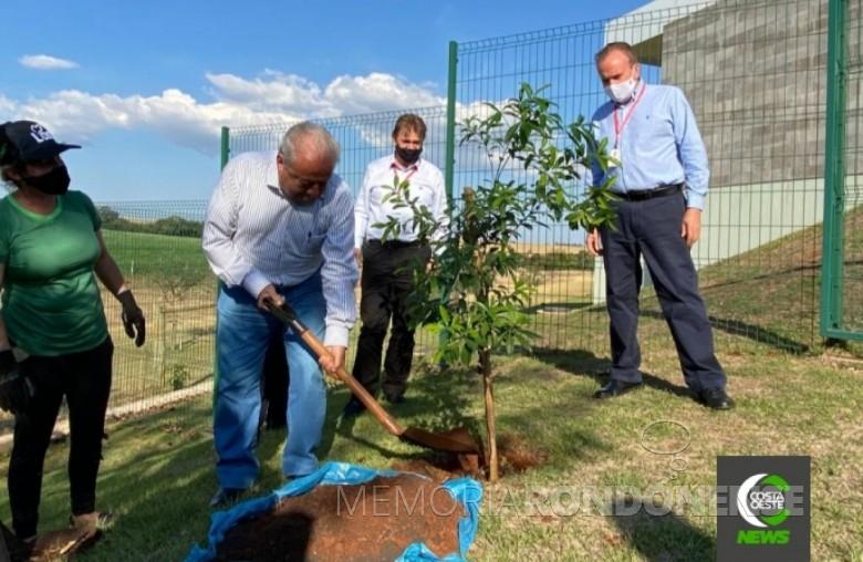 Paulinelli plantando muda de peroba rosa no Parque dos Pioneiros e Autoridades da Lar Cooperativa Agroindustrial, na cidade de Medianeira. Imagem: Acervo da cooperativa - FOTO 13 -