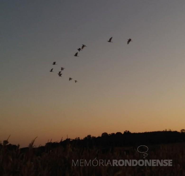 Outro instantâneo do entardecer em Marechal Cândido Rondon, em 06 de julho de 2021, em imagem feita desde a Linha Concórdia, com o voo das garças ao local de pernoite no Arroio Fundo. Imagem e crédito: Roselene Zimmermann - FOTO 23 -