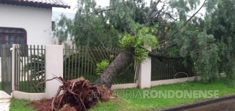 Uma das muitas árvores derrubadas na cidade de Marechal Cândido Rondon pelo temporal na noite de 13 para 14 de outubro de 2021. Imagem: Acervo PM-MCR - FOTO 12 -