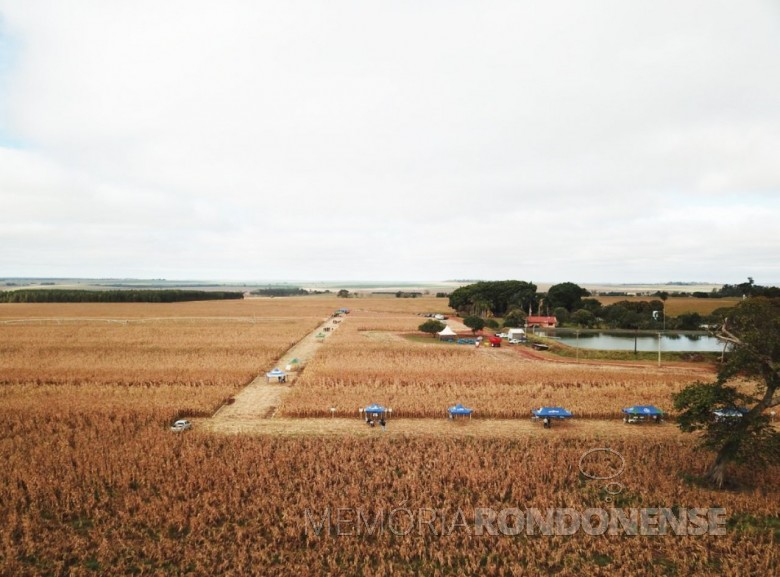 Dia de Campo de Milho Safrinha Copagril 2018 na fazenda da família Petrykoski, em Itaquiraí (MS)> Imagem: Acervo Comunicação Copagril -  FOTO 11 -