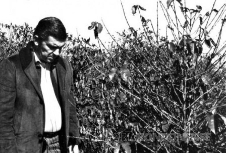 O então governador Jayme Canet Júnior visitando os cafezais do Norte do Paraná atingidos pela geada negra de 1975. Ele próprio um cultivador de café na região.  Imagem: Acervo http://www.jws.com.br  - FOTO 2 -