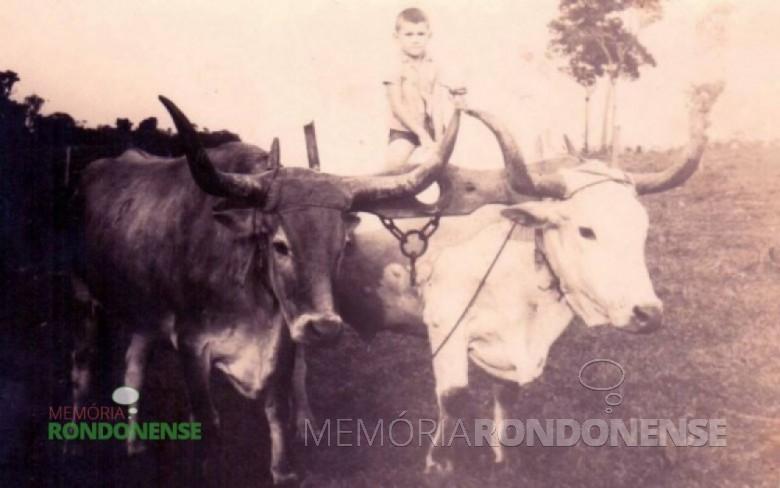 O menino Laudi Witeck, segunda criança a nascer na Linha S. Cristóvão. Na época de seu nascimento, o local era conhecido como Lageado Marrecos, onde seus pais se estabeleceram no começo de 1950. Claudi Witeck reside hoje em Tucamã, PA, de cuja cidade já foi prefeito. Imagem: Acervo Cleci Kleemann e Clarice Dahmer - FOTO 7 -