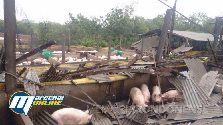 Propriedade de criação de suínos no distrito de Iguiporã, destruída pelo temporal.  Imagem: Acervo Marechal OnLine - FOTO 11 -