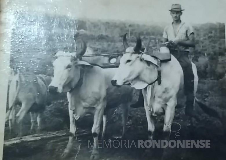 Pioneiro Adolfo Oscar Kunzler com sua junta de bois zebus.
