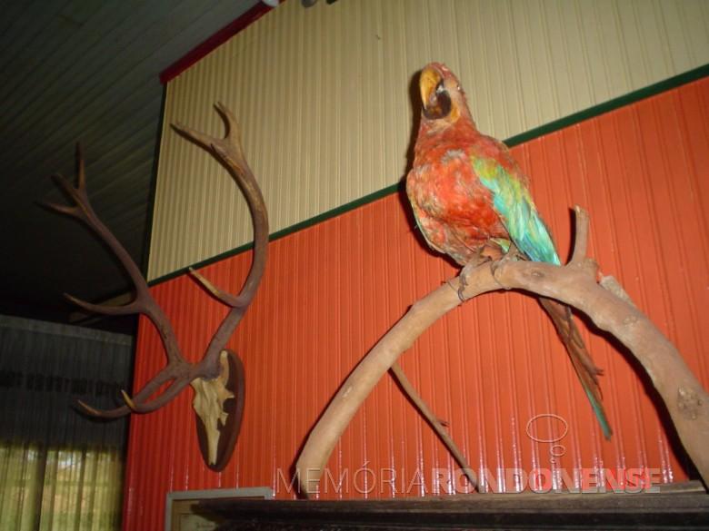 Casa da Família Seyboth - vista interna, com destaque para os chifres de veado-campeiro e outro pássaro empalhado por Alfredo krause.