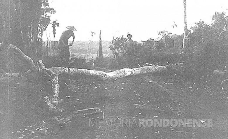 Derrubada de mato à machado, em  1953.